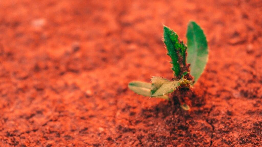 Chińska misja na Marsa - rośliny