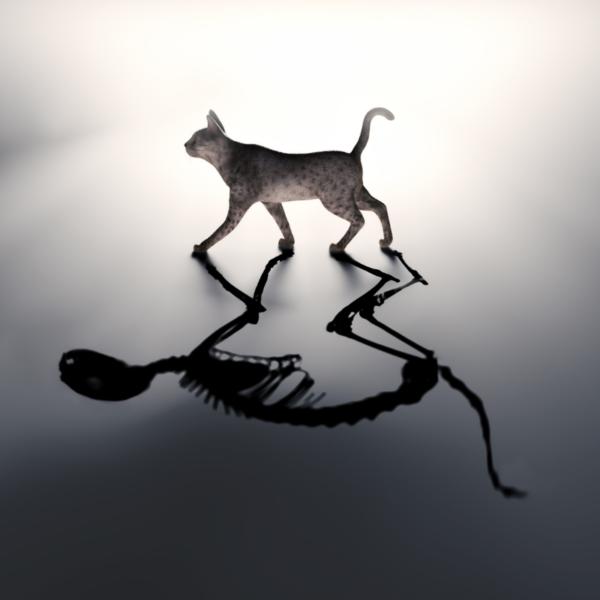 kot schrodingera obraz głowny