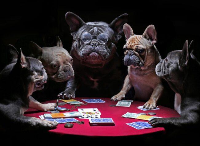gry z psami