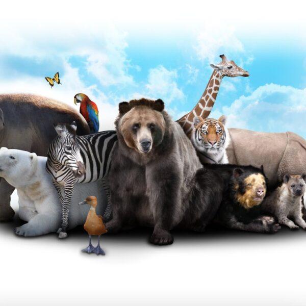 gry o zwierzętach