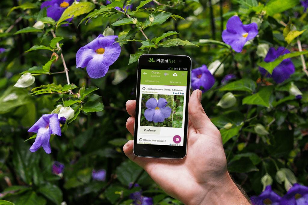 aplikacje do rozpoznawania roślin - PlantNet
