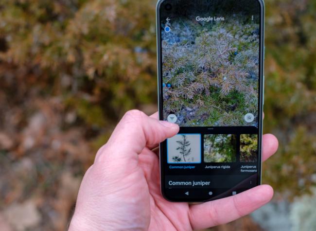 aplikacje do rozpoznawania roślin
