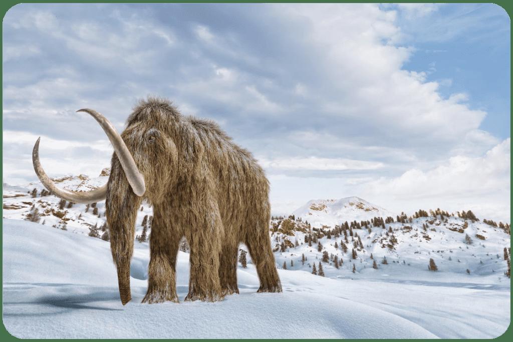 Miejsce życia mamutów