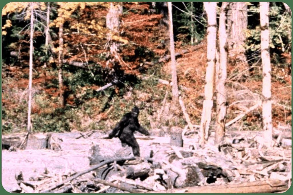 Wielka stopa w filmie Pattersona