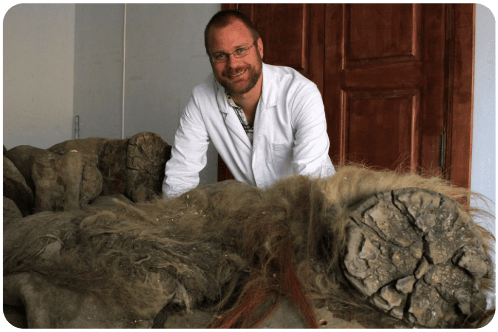 Szczątki mamuta