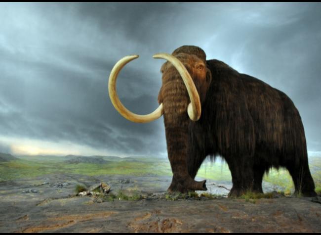 mamuty